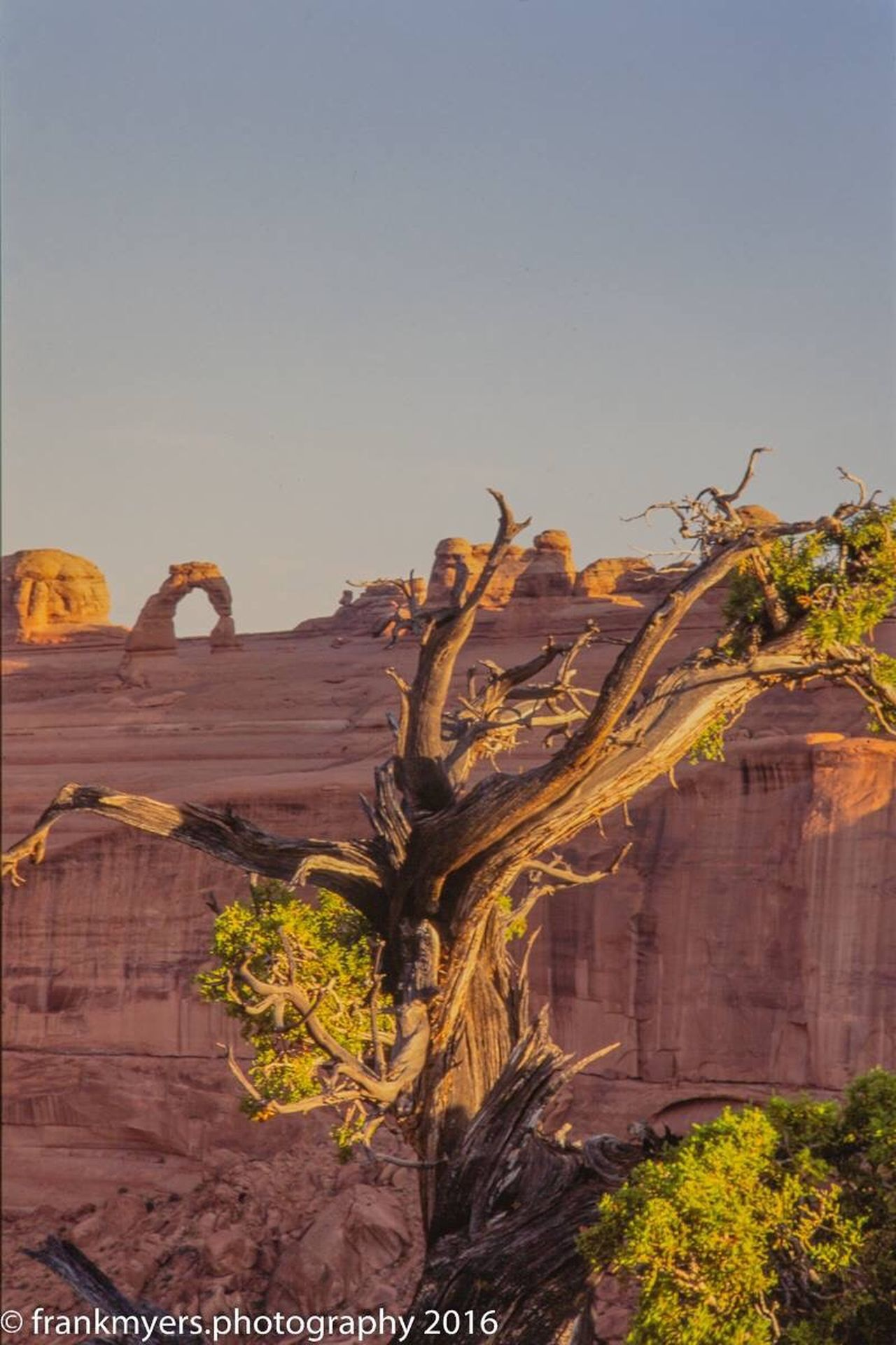 Bristlecone Pine and Delicate Arch Nature Rock - Object No People Physical Geography Outdoors Beauty In Nature Geology Tree Clear Sky Scenics Tranquil Scene Low Angle View Arid Climate Day Canyon