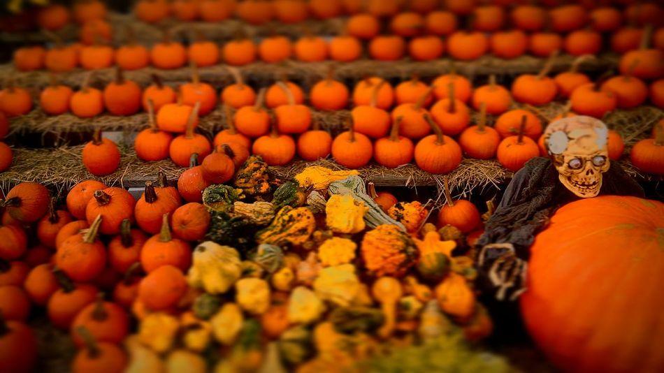 Halloween2015 Halloween_Collection Pumpkin!Pumpkin! Pumkinpicking🎃 Happyhalloween