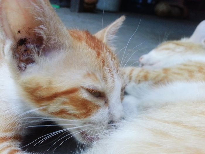 Happy Mothers' Day Close-up Baby Cats Cats 🐱 Catsoneyeem Catslover Cats Lovers  Kitten Kittenoftheday Kitten 🐱 Kittens <3 Kitten Adorable Kittens And Cats Cats Of EyeEm