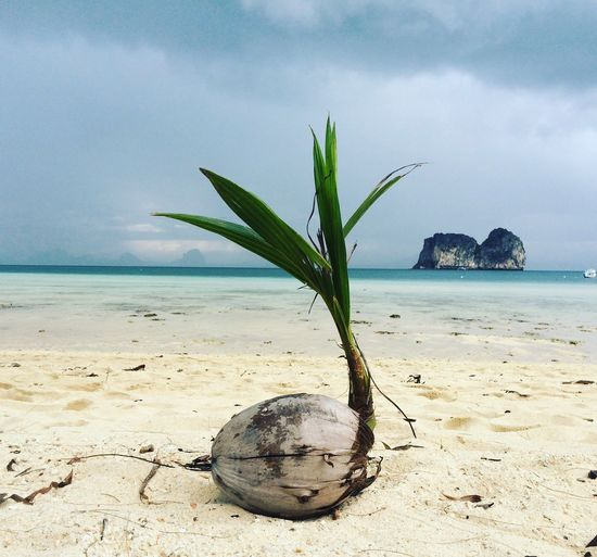 Iland Deserted Scapes Coconut Trees Beach The Secret Spaces Long Goodbye