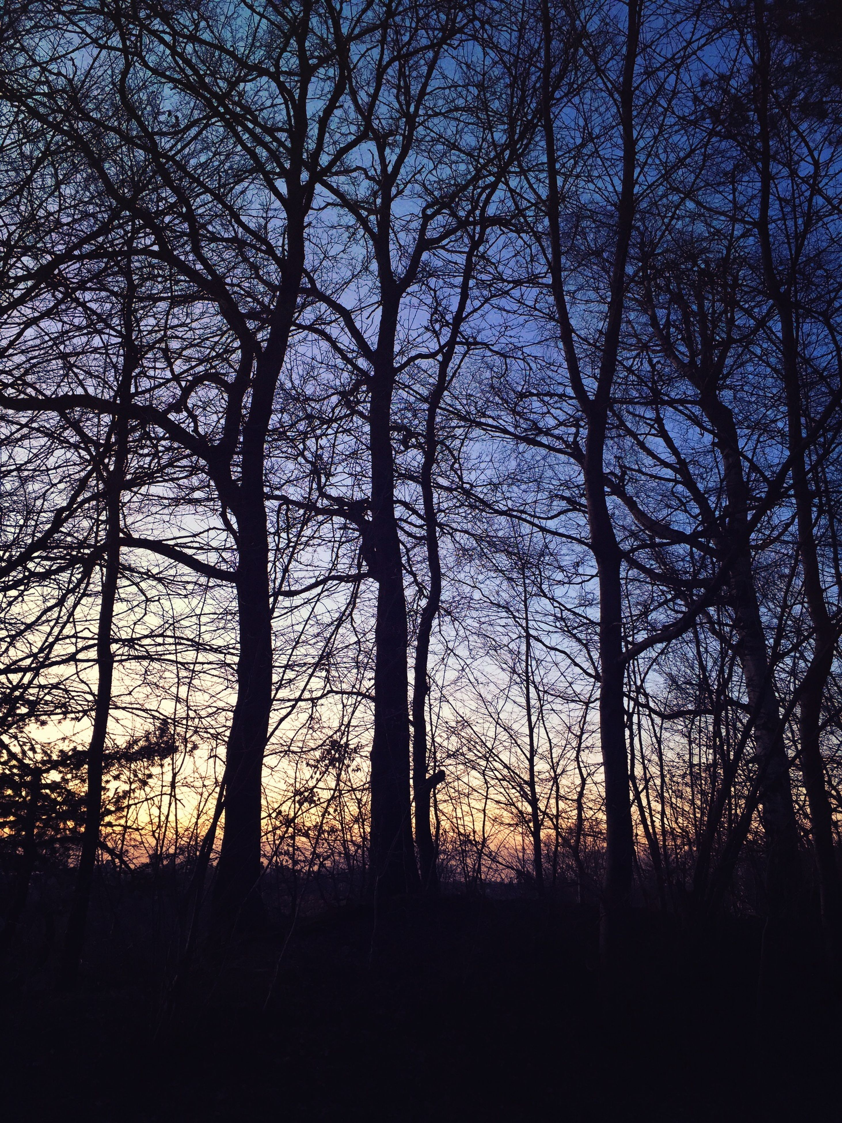 tree, silhouette, tranquility, bare tree, tranquil scene, sunset, scenics, beauty in nature, branch, nature, sky, tree trunk, landscape, growth, idyllic, forest, non-urban scene, outdoors, dark, no people