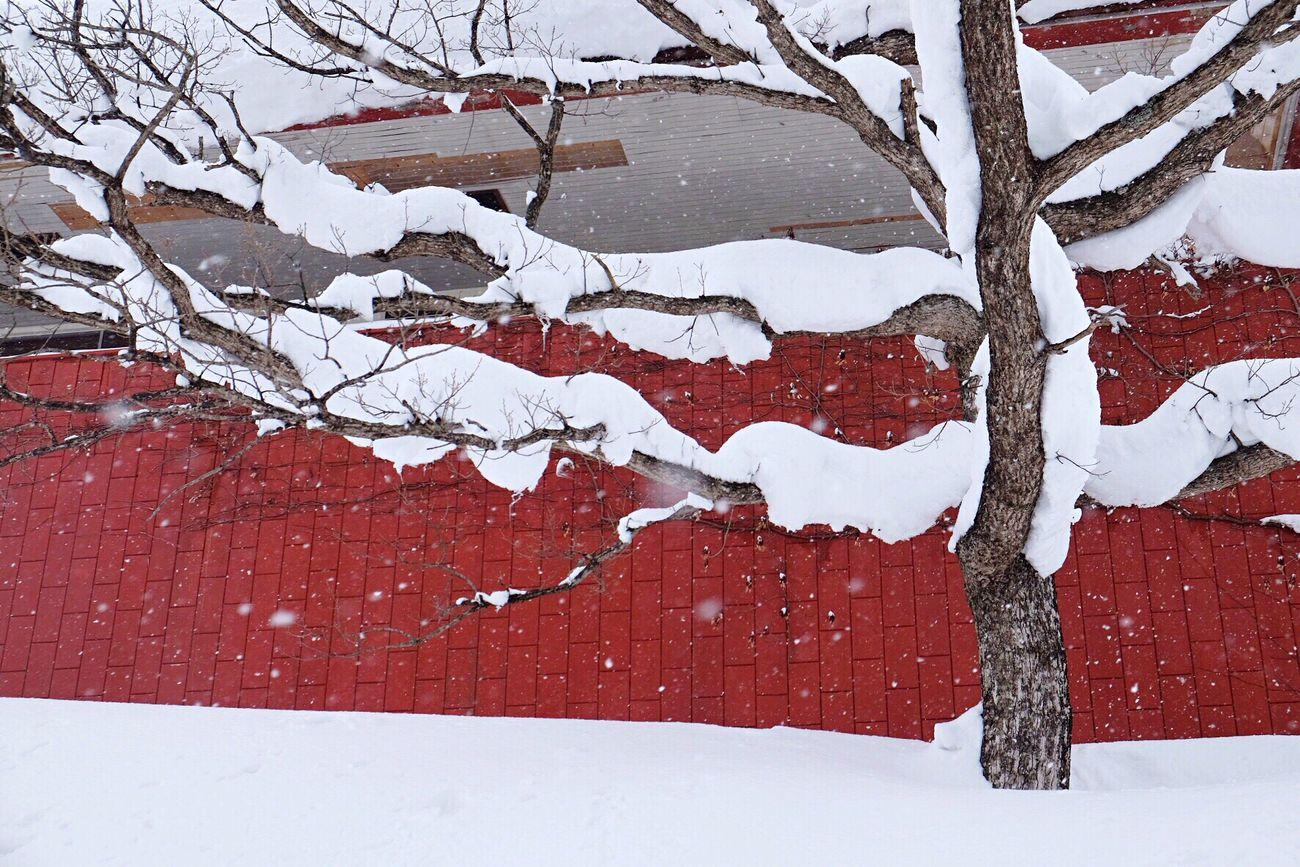 最後の雪の写真。早く満開の桜がみたい Winter Snow Nature No People Outdoors Beauty In Nature Japan Photography Japan