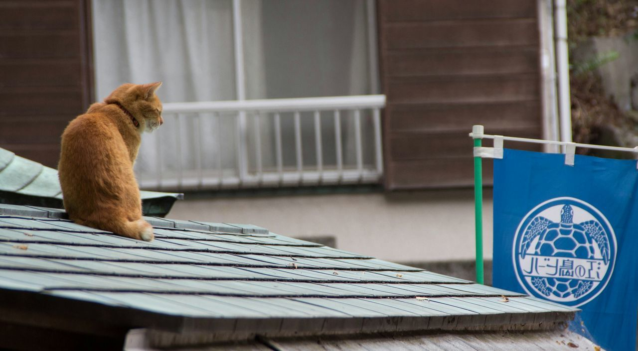 building exterior, built structure, house, architecture, outdoors, day, mammal, one animal, domestic cat, no people, focus on foreground, animal themes, pets, domestic animals, close-up