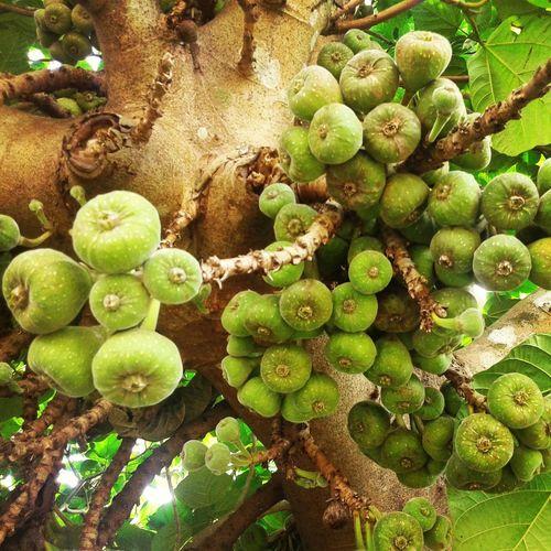 Nature Green Check This Out Thattekad Kothamangalam