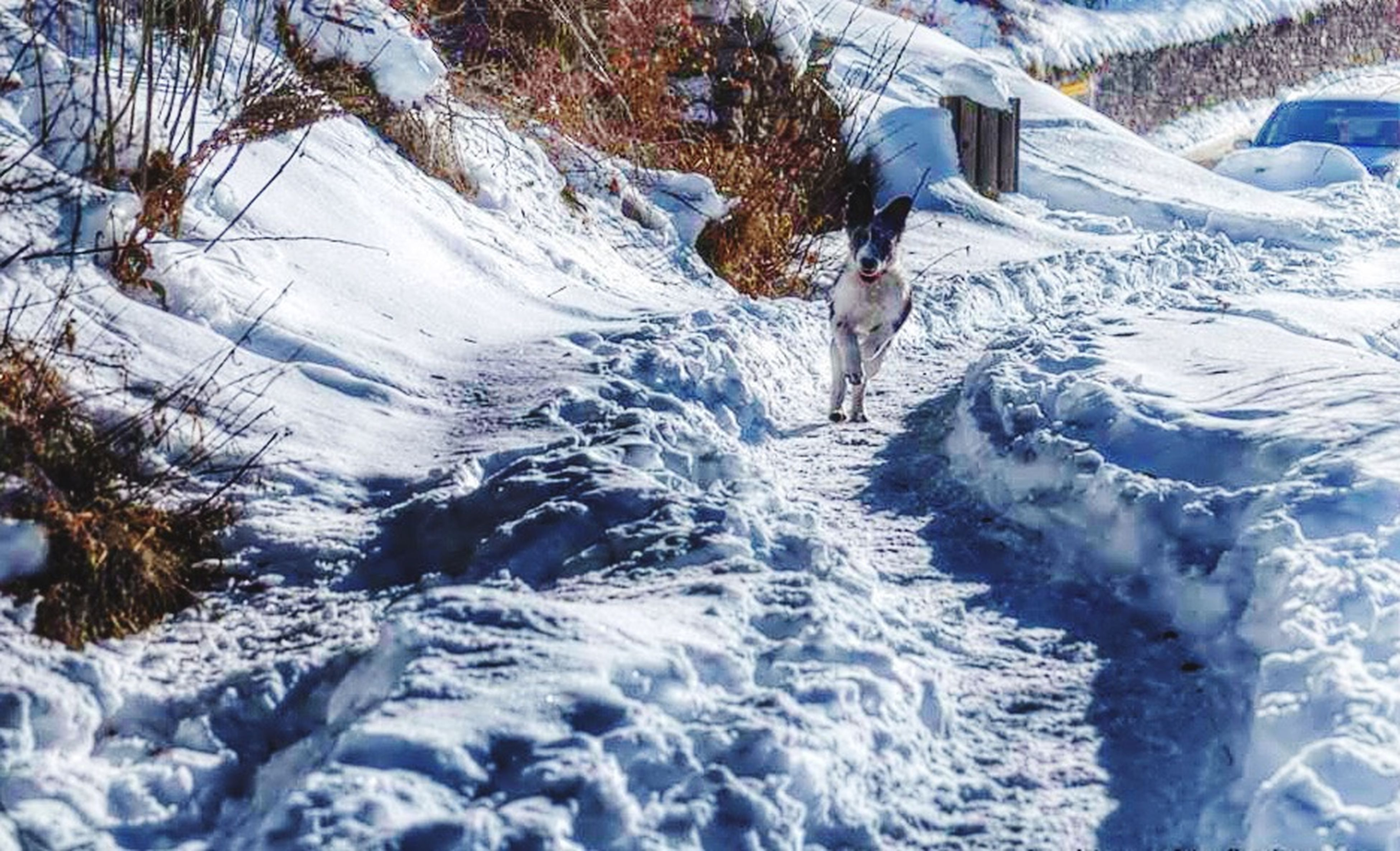 Tu che corri verso me... Immensamente unica! Bordercollie  Dog❤ Amicofedele Karma Lovedogs I Love My Dog Snow ❄ Magic Moments