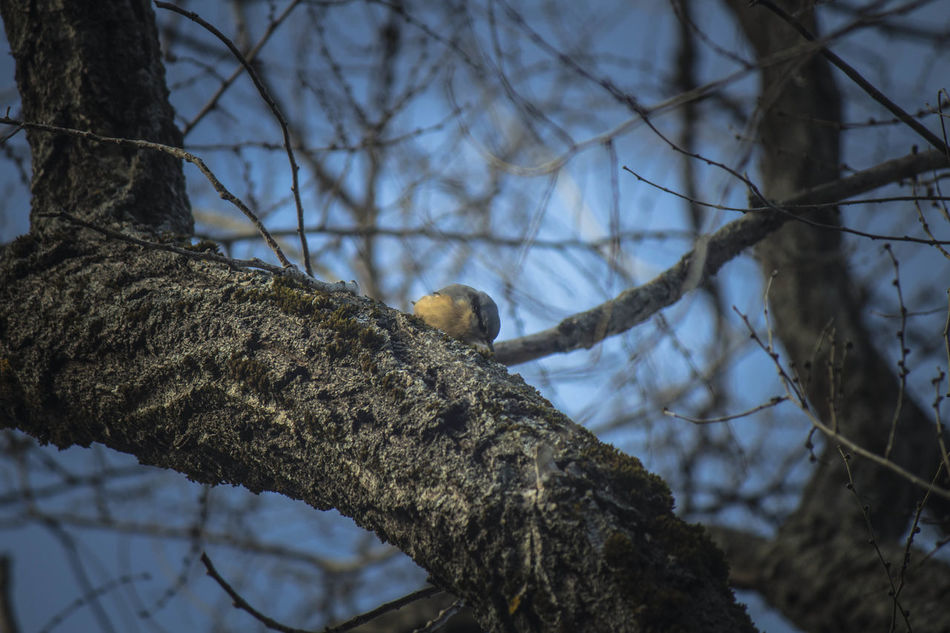 Animal Themes Animal Wildlife Animals In The Wild Bare Tree Bird Bird Of Prey Branch Day Fuenmayor Low Angle View Nature No People One Animal Outdoors Perching Sierra Magina Sky Torres Tree Tree Trunk Woodpecker