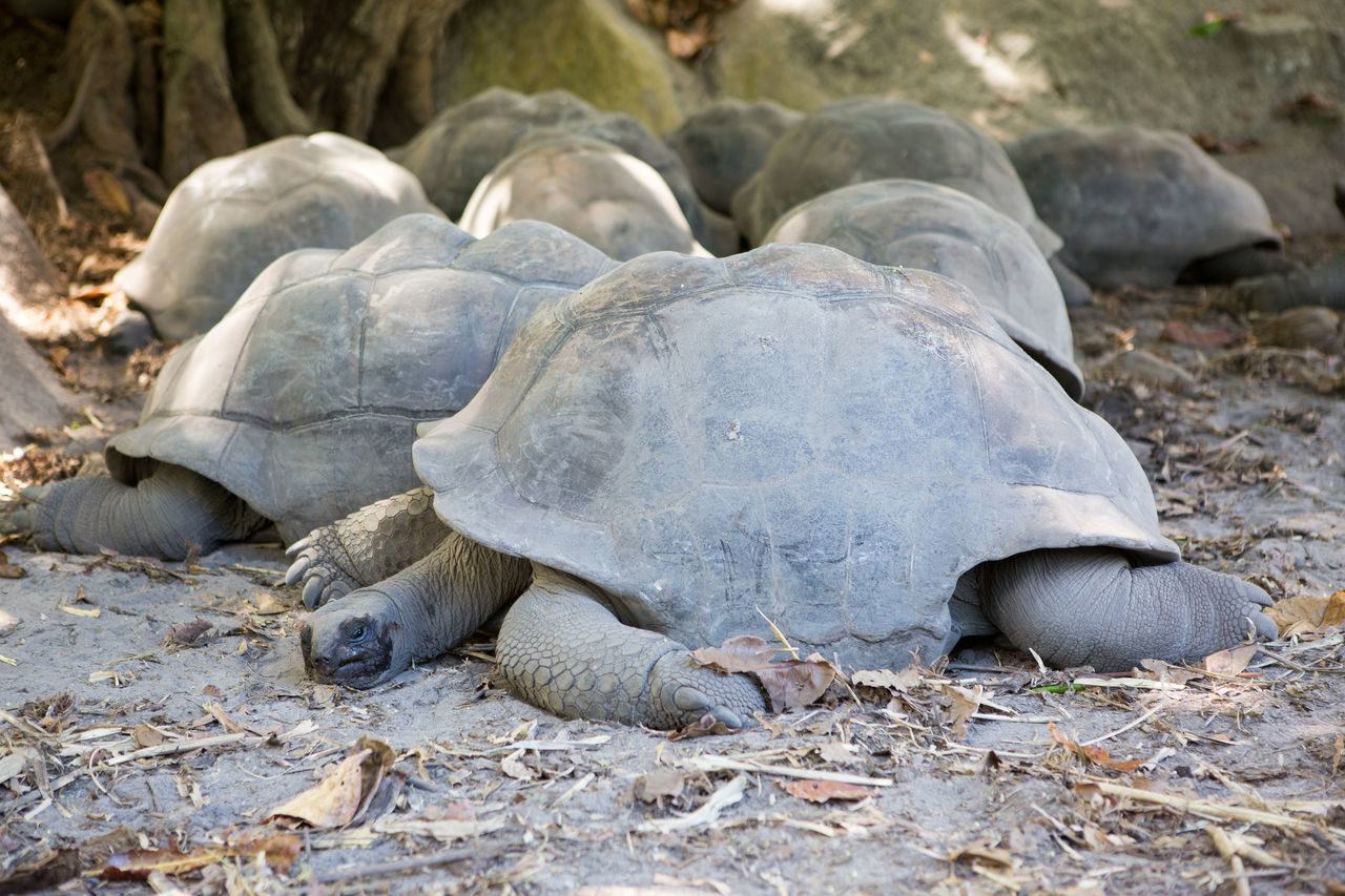 Baby Day Environmental Conservation Giant Tortoise Nature Outdoors People Social Issues Tortoise
