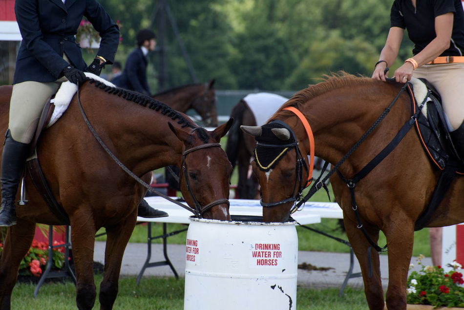 Drinking Focus On Foreground Horse Horse Show Hunter Jumper Orange Thoroughbred Water