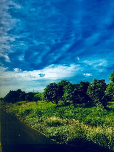 Green AI Now! Tree Sky Nature Cloud - Sky Landscape Blue EyeEmNewHere Beauty In Nature Grass Growth