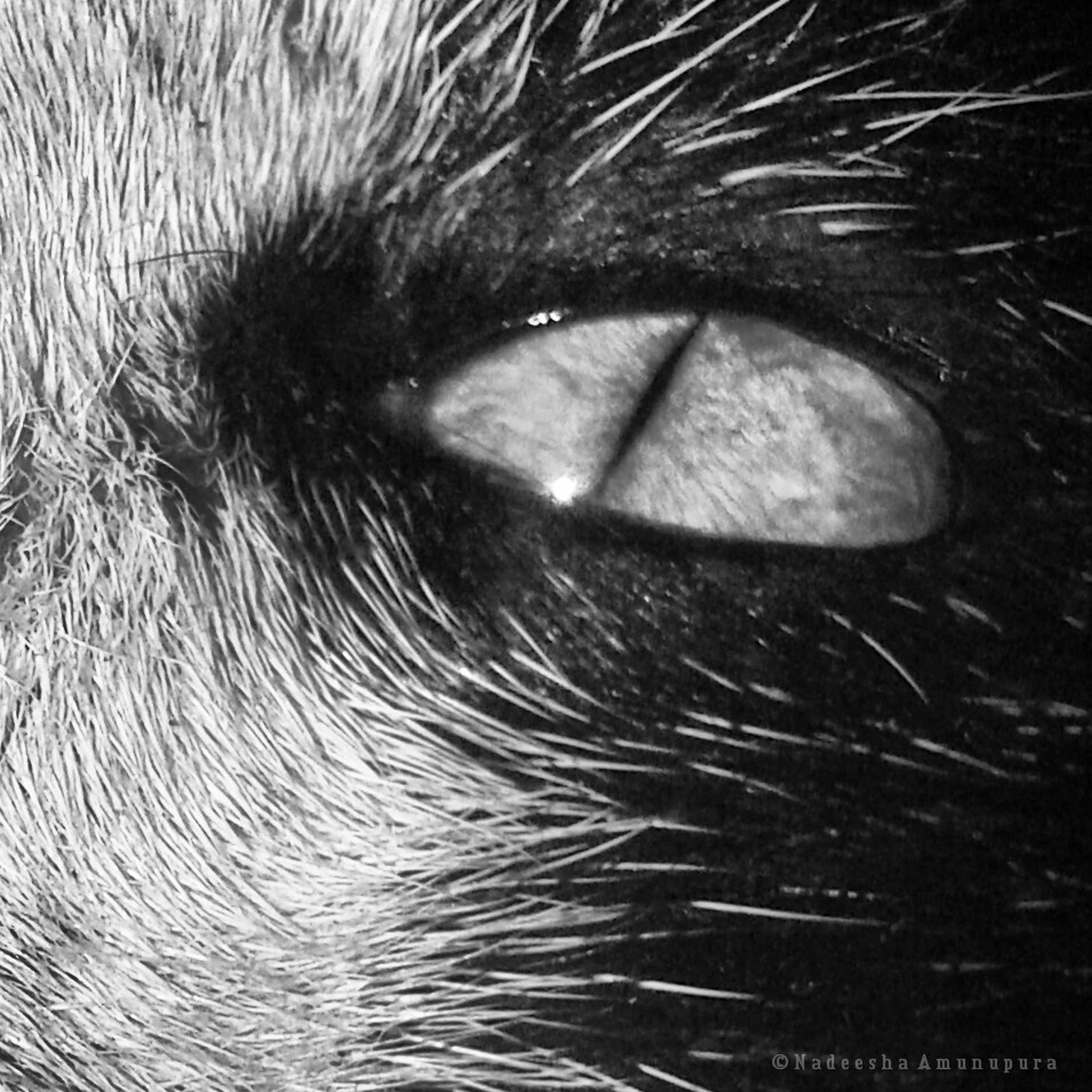 close-up, part of, no people, night, water, reflection, one animal, outdoors, motion, detail, nature, long exposure, animal body part, animal head, selective focus, pets, black background, grass, blurred motion, studio shot