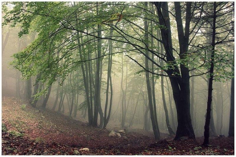 Deep Forest !