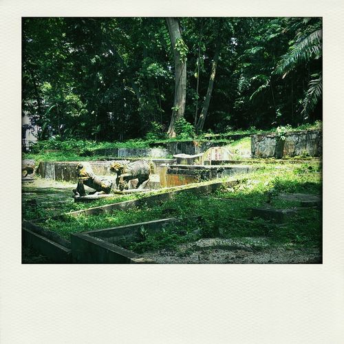 in this strange and beautiful place again.... Gravestone Things That Are Green
