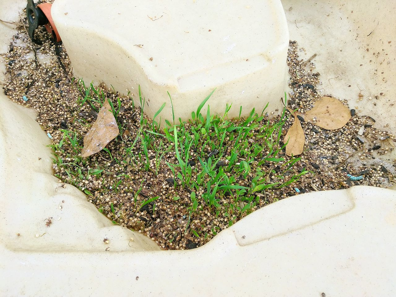 The Unexpected Birdseed Sprouting Up Sandbox Planting Seeds Who Knew