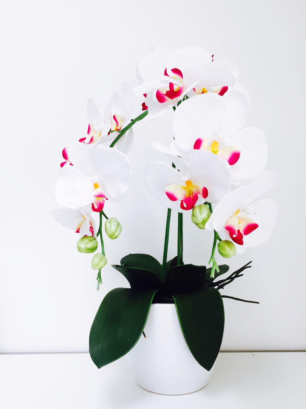 Beautiful stock photos of orchid,  Beginnings,  Botany,  Bud,  Close-Up