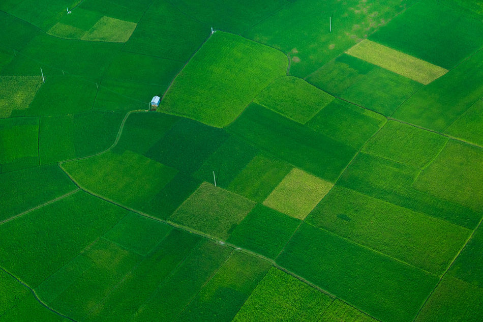 Aerial View Agriculture Day Field Grass Green Color Nature No People Outdoors Patchwork Landscape Soccer Field Stadium Tranquil Scene Tranquility Flying High