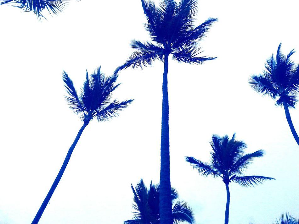 Relaxing Enjoying Life Palms