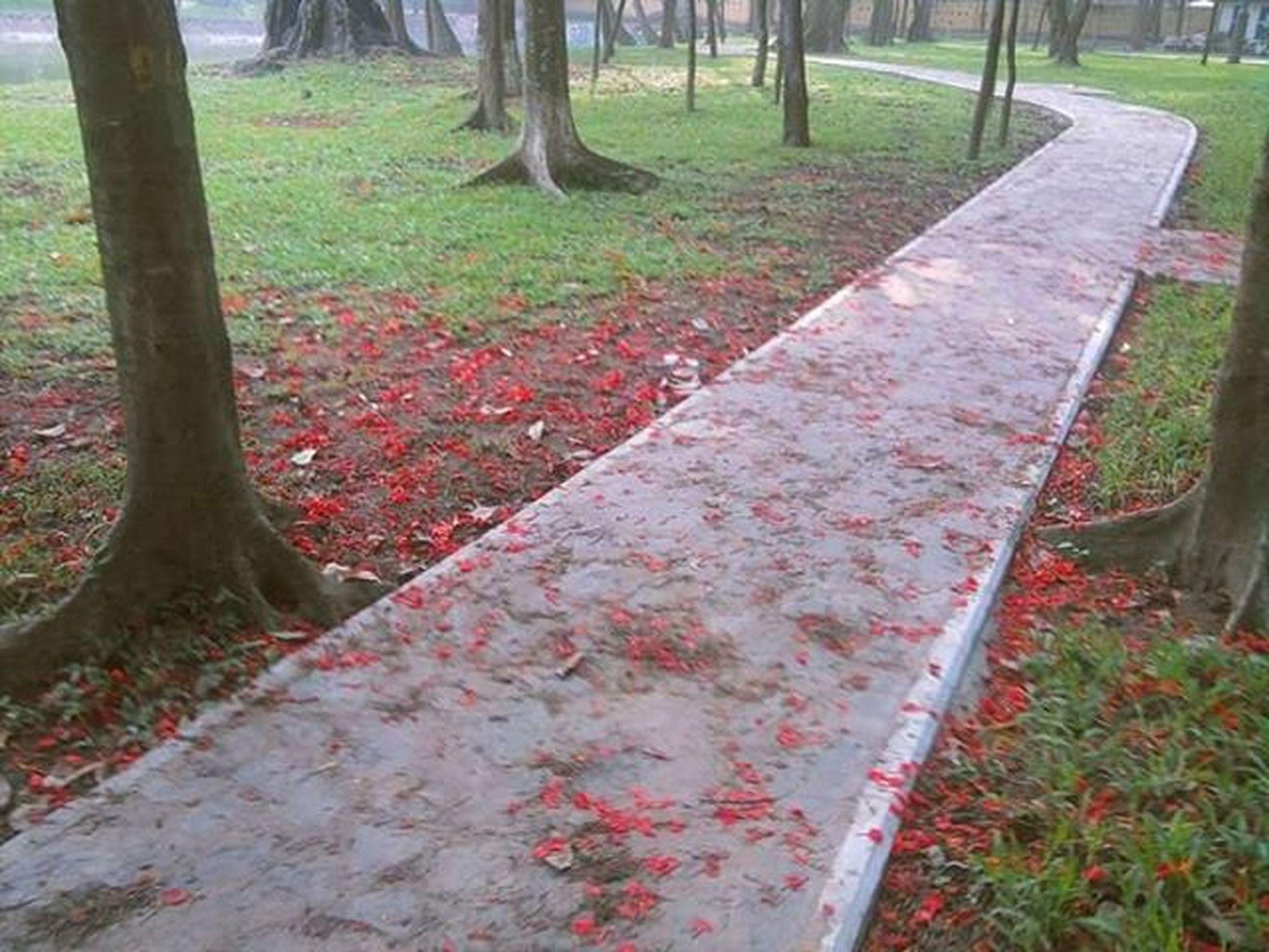 Con đường còn dài...🌹 Hanoi Red Road Park Côngviên Byminnsonn