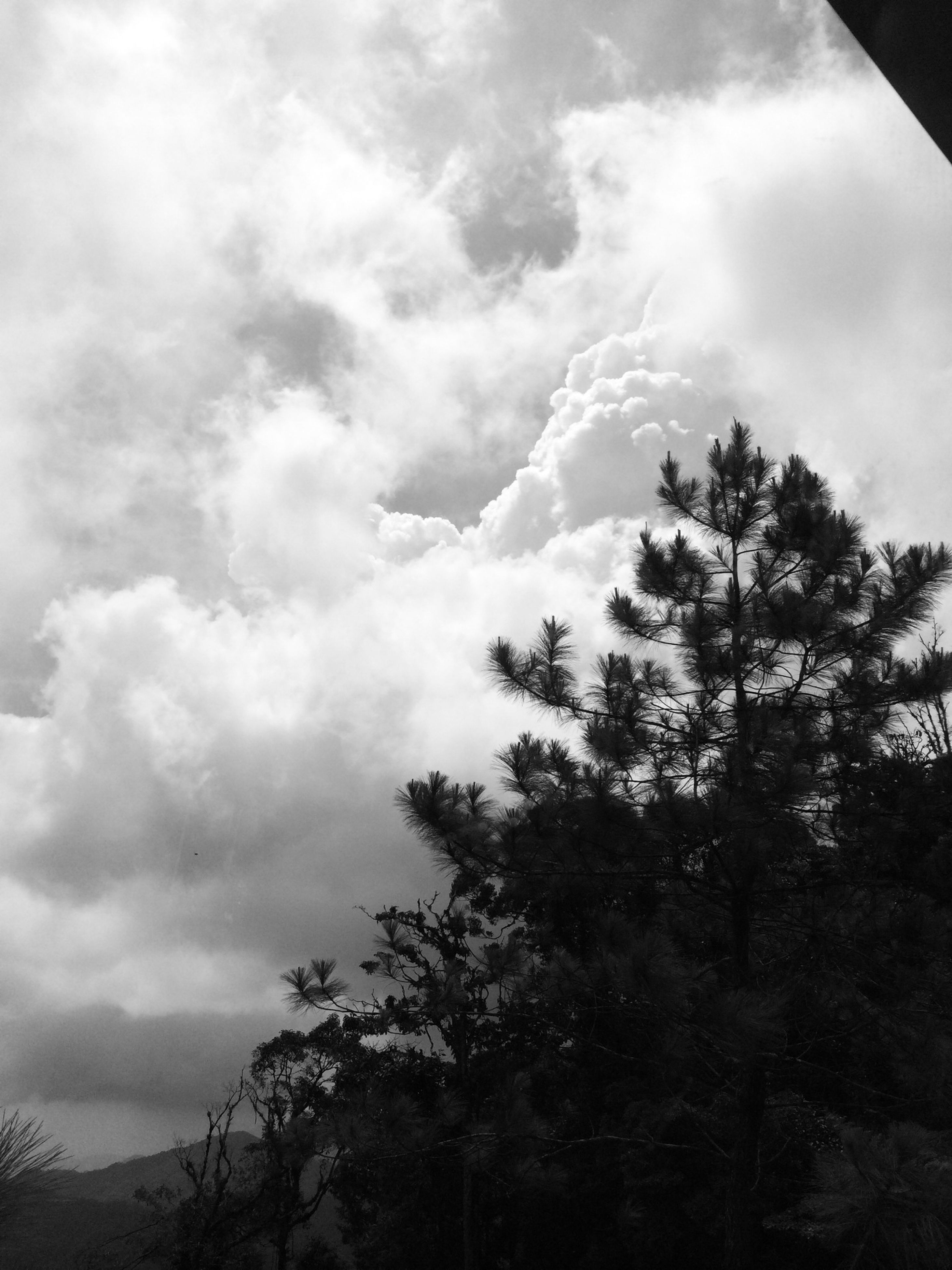 tree, sky, cloud - sky, tranquility, tranquil scene, scenics, beauty in nature, cloudy, low angle view, silhouette, nature, cloud, forest, day, growth, outdoors, idyllic, no people, non-urban scene, landscape