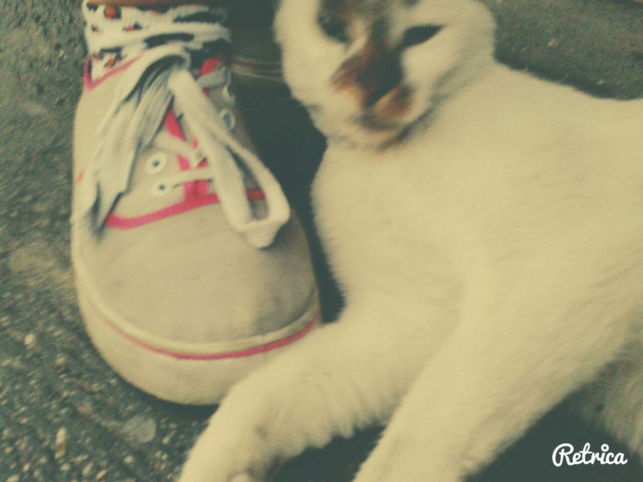 Soooo Sweeet! Litle Cat
