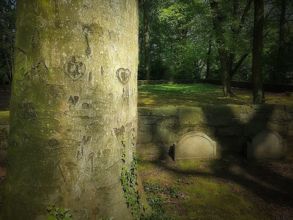 Ewigeliebe Herz Baum Friedhof Cemetery Truelove