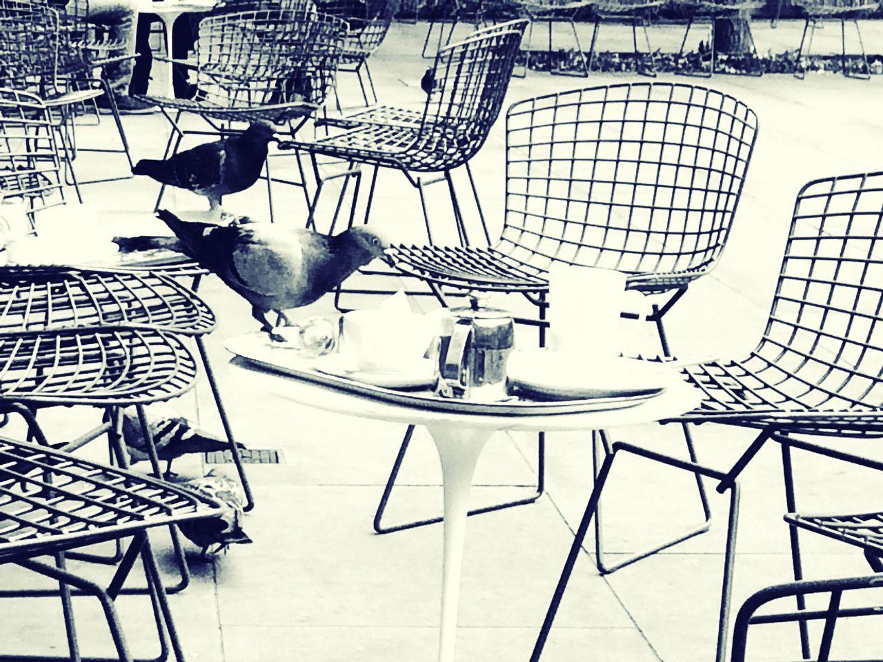 It's Tea Time... Tea Time London LONDON❤ Victoria And Albert Museum Pidgeons