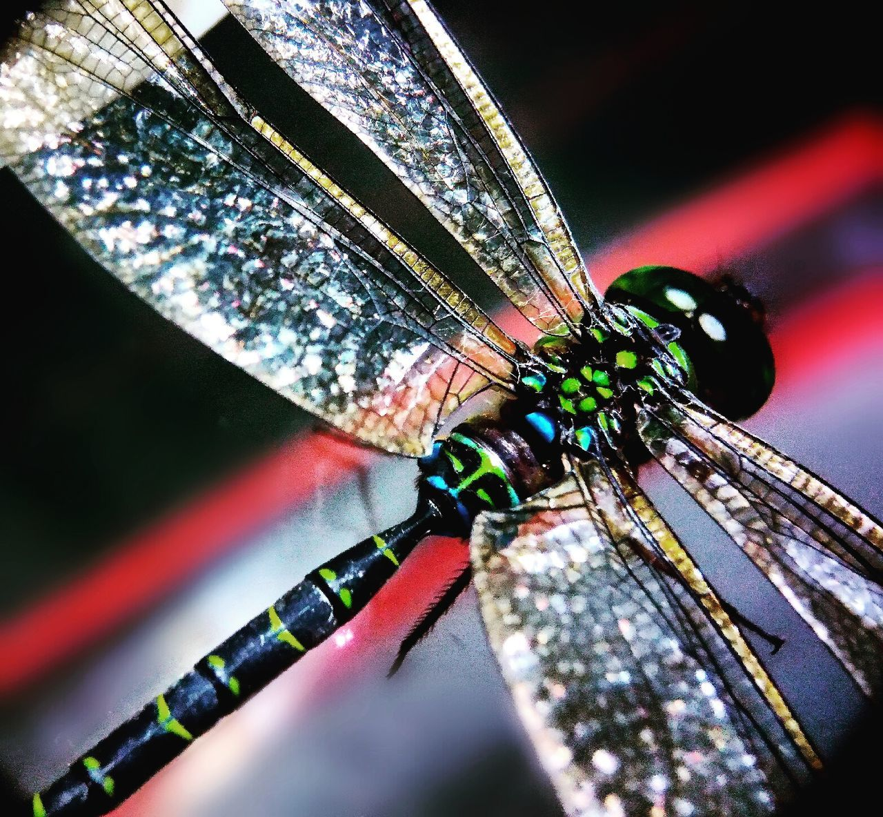 Dragon fly Close-up Insect No People Multi Colored Day Indoors  Animal Themes Macro Photography Macrophotography Macroclique Macro_perfection Macro_captures Macro World Macro_collection Nature_collection EyeEm Best Shots EyeEm Nature Lover Macroporn Macroworld_tr Macroworld Macro_secrets Macroinsect Macro Insects