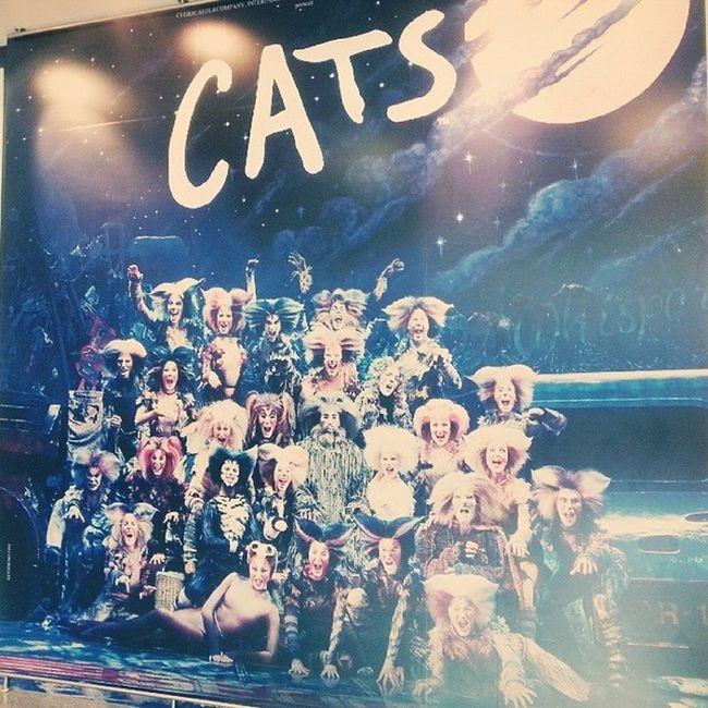 캣츠 Cats 뮤지컬 Musical 블루스퀘어 한강진