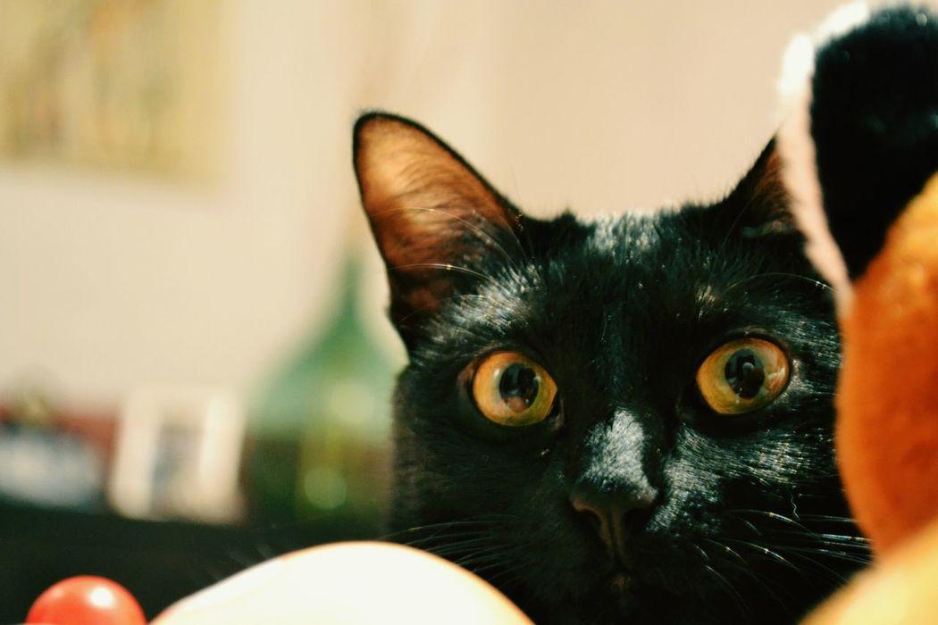 Cat♡ Black Selvaggio Home Peluche
