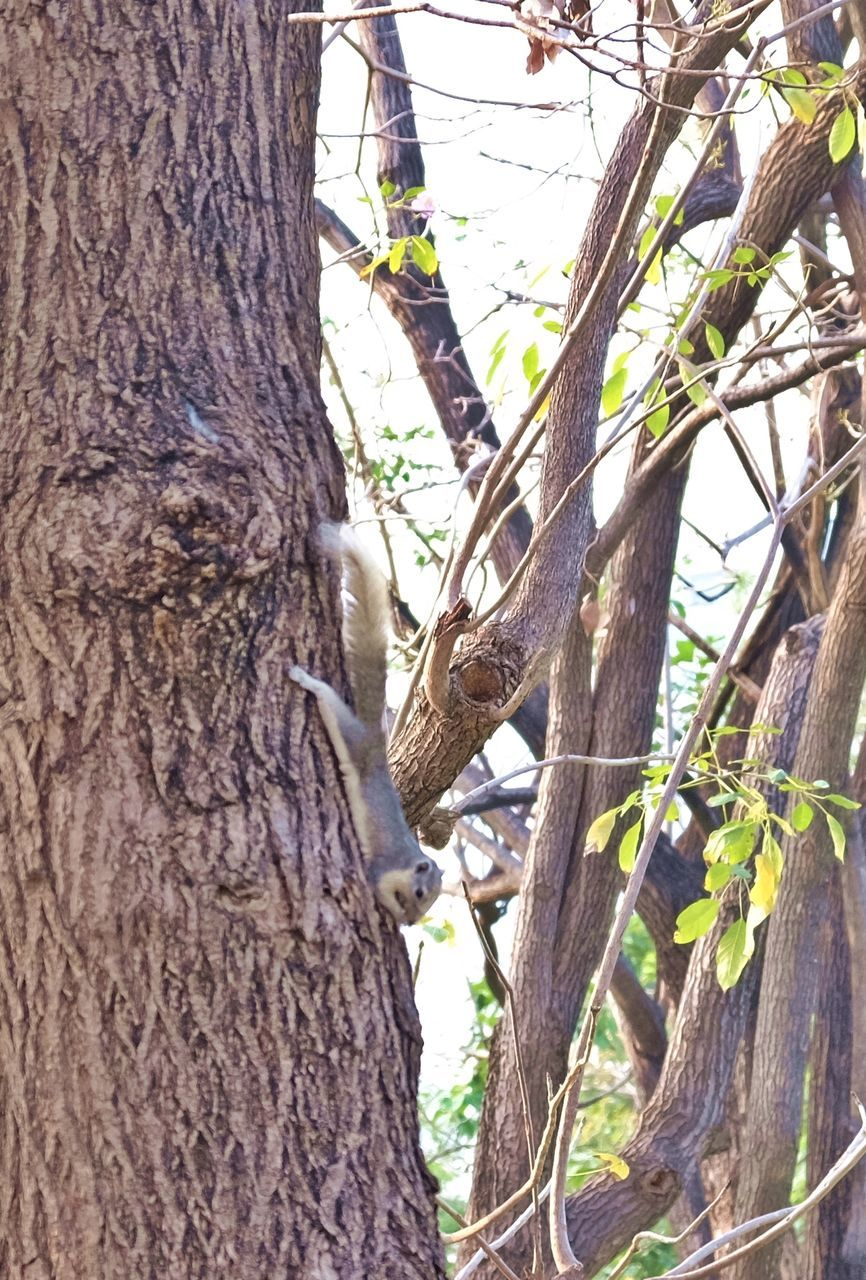tree trunk, tree, branch, nature, one animal, bark, growth, day, woodpecker, animal themes, no people, outdoors, animals in the wild, beauty in nature, bird, perching, close-up, rope swing, sky