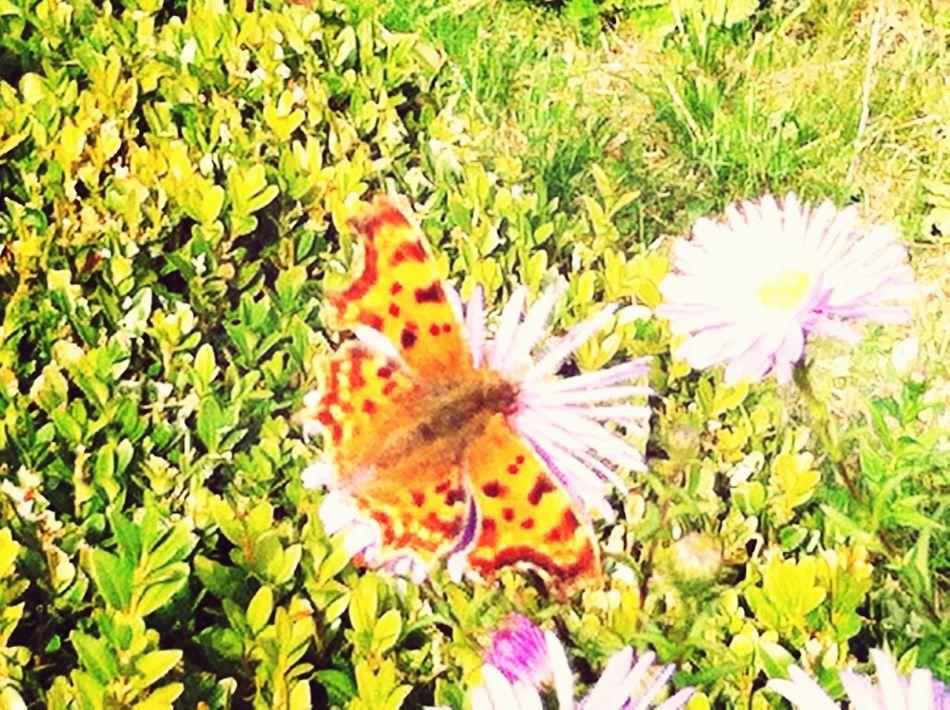 Eyem Nature Lovers  Butterfly Autumn