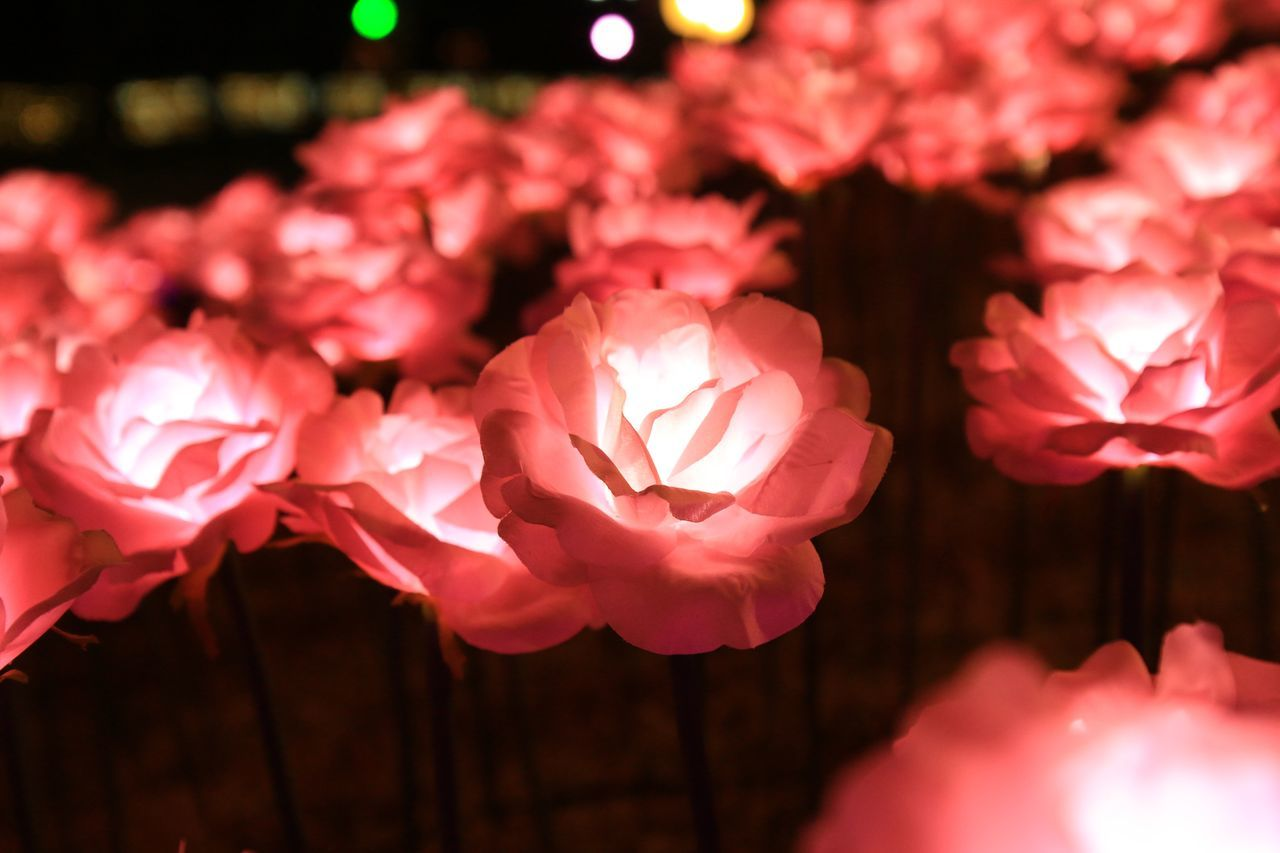 Beautiful Beauty In Nature Blooming Close Up Technology Close-up Colour Of Life Darkness And Light Enjoying Life Fine Art Photography Flower Head Flowers Fragility Light Light And Shadow Macro Nature Neon Neon Lights Night No People Pink Color Roses Taking Photos Technology Abstract