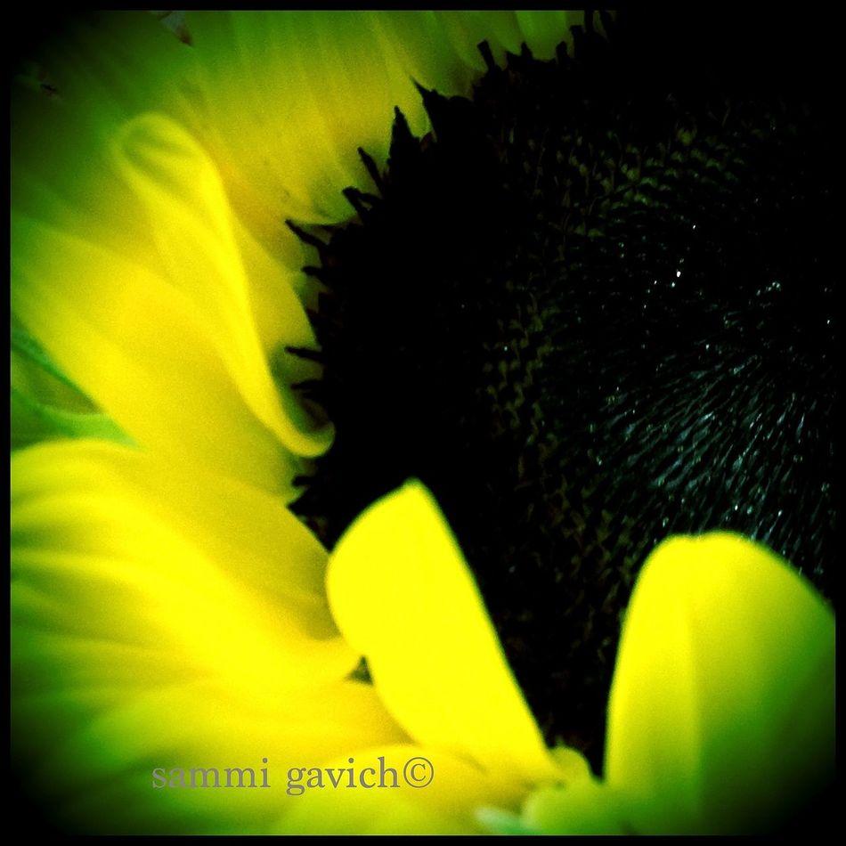 The Minimals (less Edit Juxt Photography) EyeEm Nature Lover Flowerporn AMPt_community