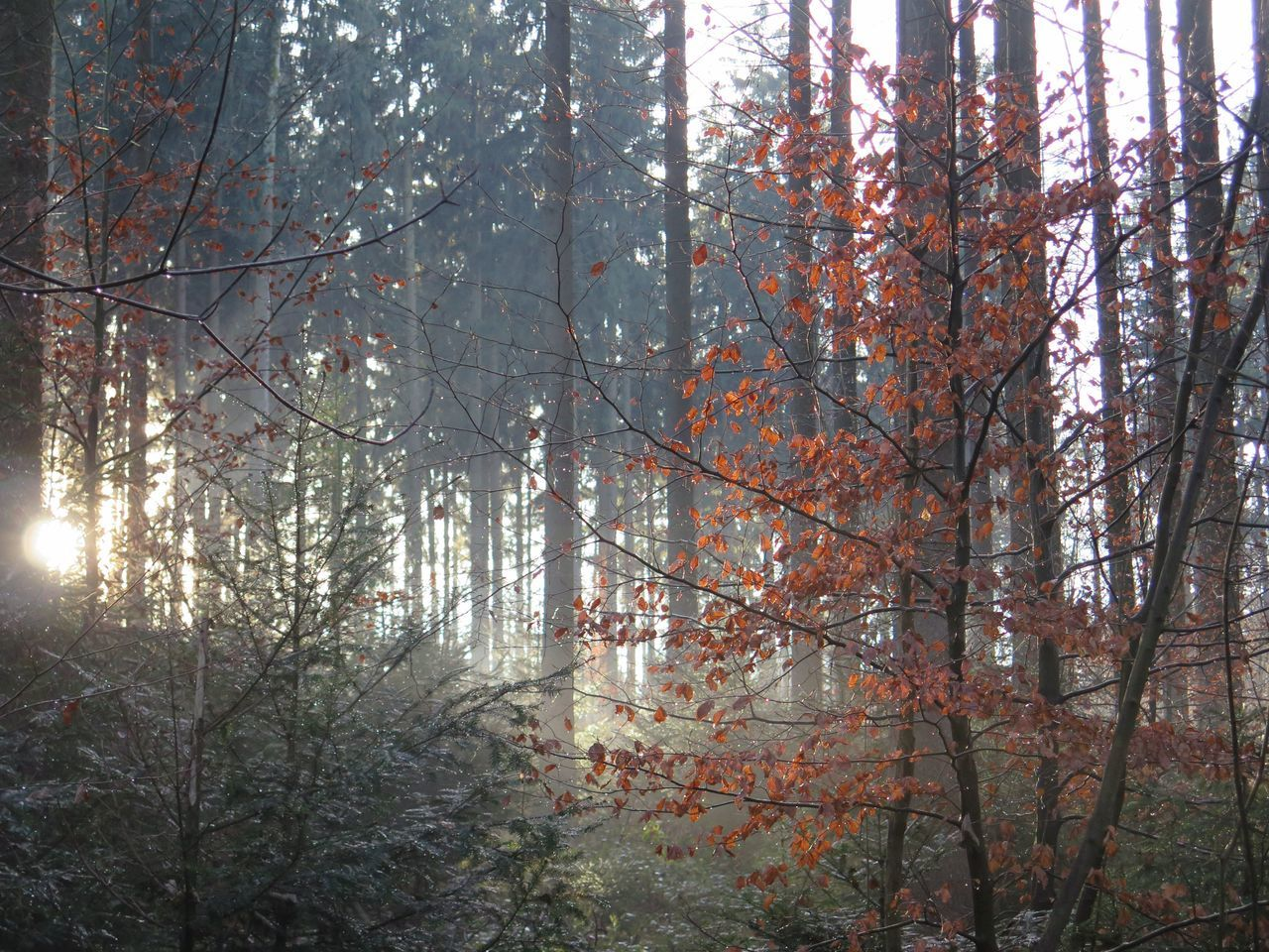Trees Nature Photography Cold Days Forest Photography Sunrais Naturelover Trees And Nature