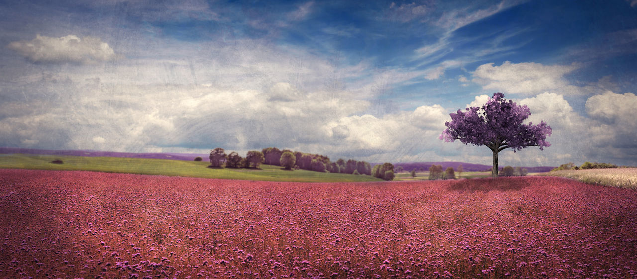 beauty in nature, nature, landscape, field, tranquility, scenics, tree, tranquil scene, agriculture, cloud - sky, sky, rural scene, outdoors, day, flower, growth, no people, plowed field, freshness