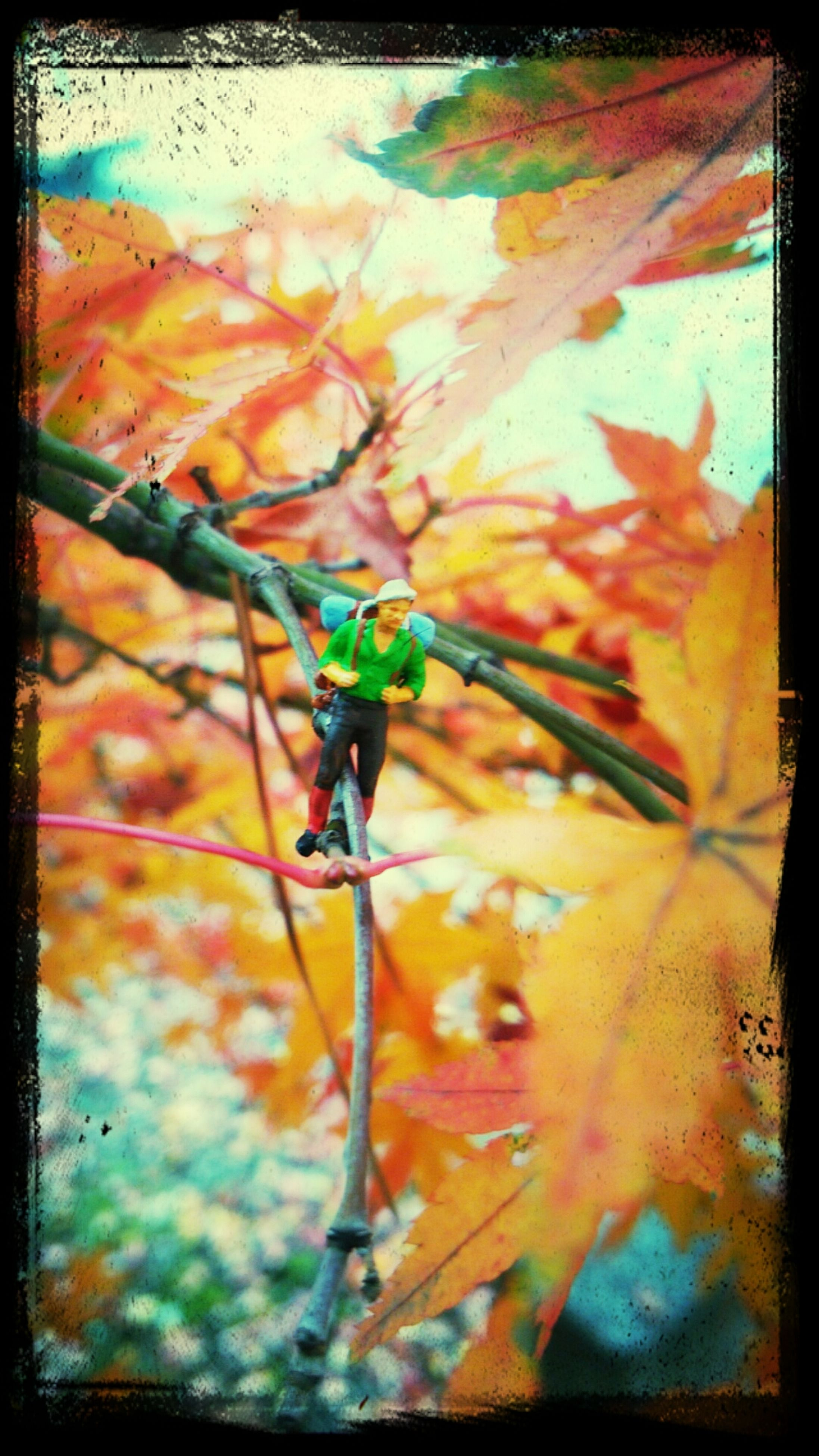 transfer print, auto post production filter, leaf, close-up, autumn, change, nature, orange color, day, focus on foreground, full frame, no people, branch, outdoors, backgrounds, beauty in nature, leaves, season, multi colored, selective focus