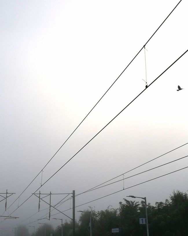 Crow over the train line Crow Train Train Line Sky Fog Foggy Morning Cable Electricity  Power Supply Power Line  Outdoors No People Nature Connection Telephone Line Electricity Pylon Horizontal Day Sky Tree