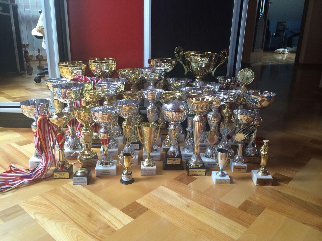 Our collection Tropheus Dog Show Success