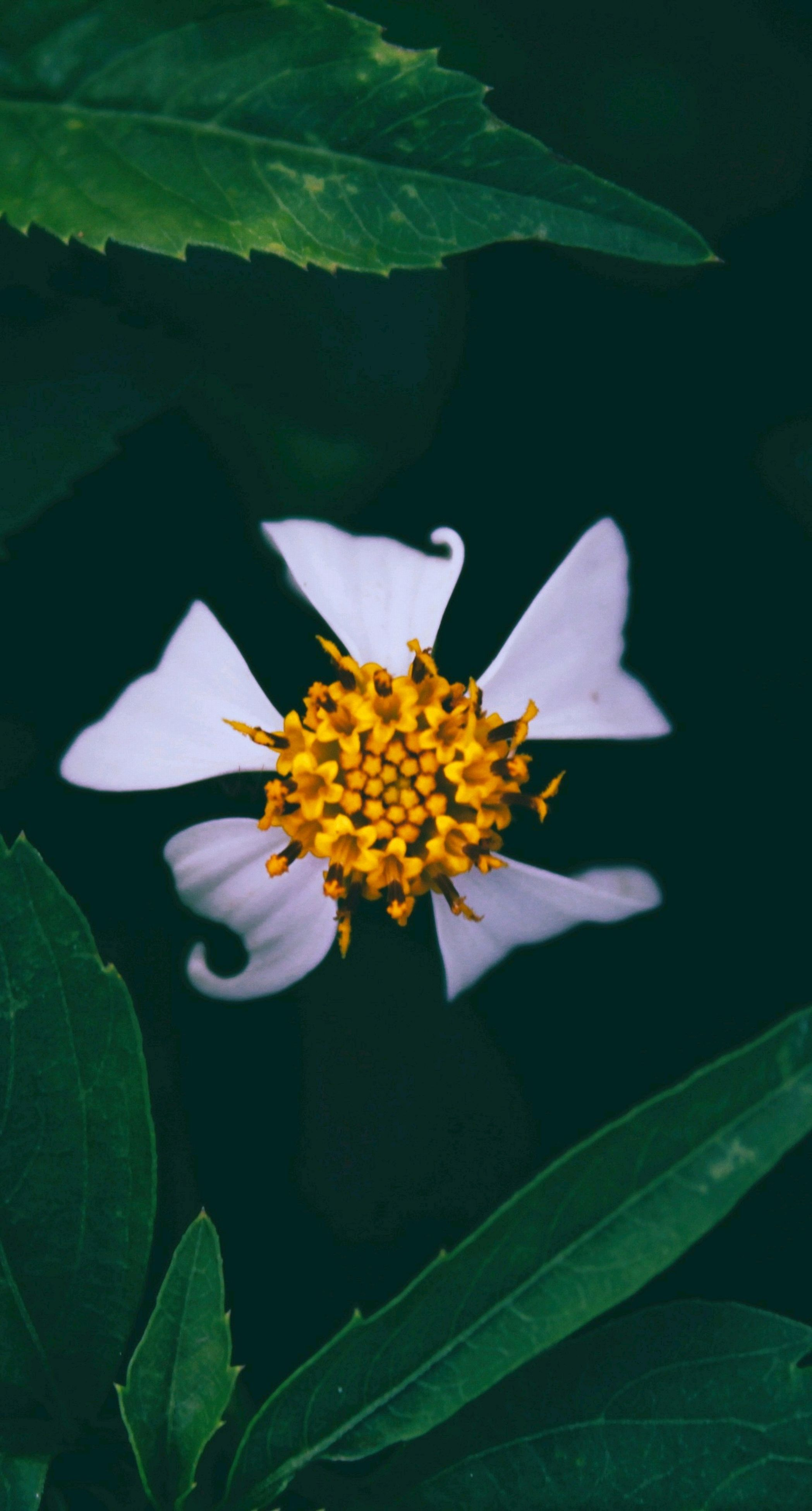 leaf, flower, petal, growth, plant, nature, fragility, beauty in nature, freshness, blooming, flower head, no people, close-up, outdoors, day
