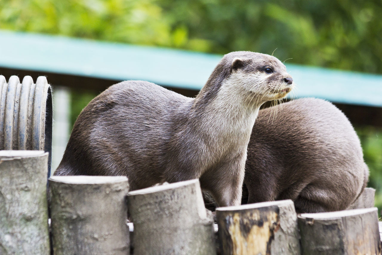 animal themes, mammal, one animal, no people, domestic animals, day, outdoors, focus on foreground, animals in the wild, animal wildlife, nature, pets, close-up