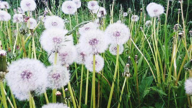 Summer Nature Beauty Flower Spring Sunshine White&green Mybestphoto2015 Wildlife & Nature