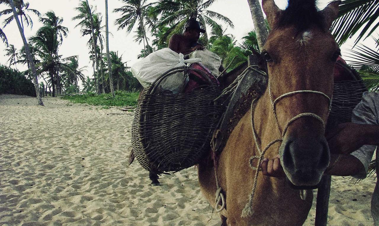 Brasil Praia Do Forte, Bahia - Brasil Donkey Campesino