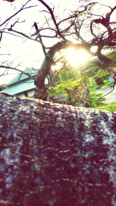 Holidays Sky And Trees Summer ☀ Yeah! Life Is A Joke Live Your Life *-* Just Like That Nature On Your Doorstep