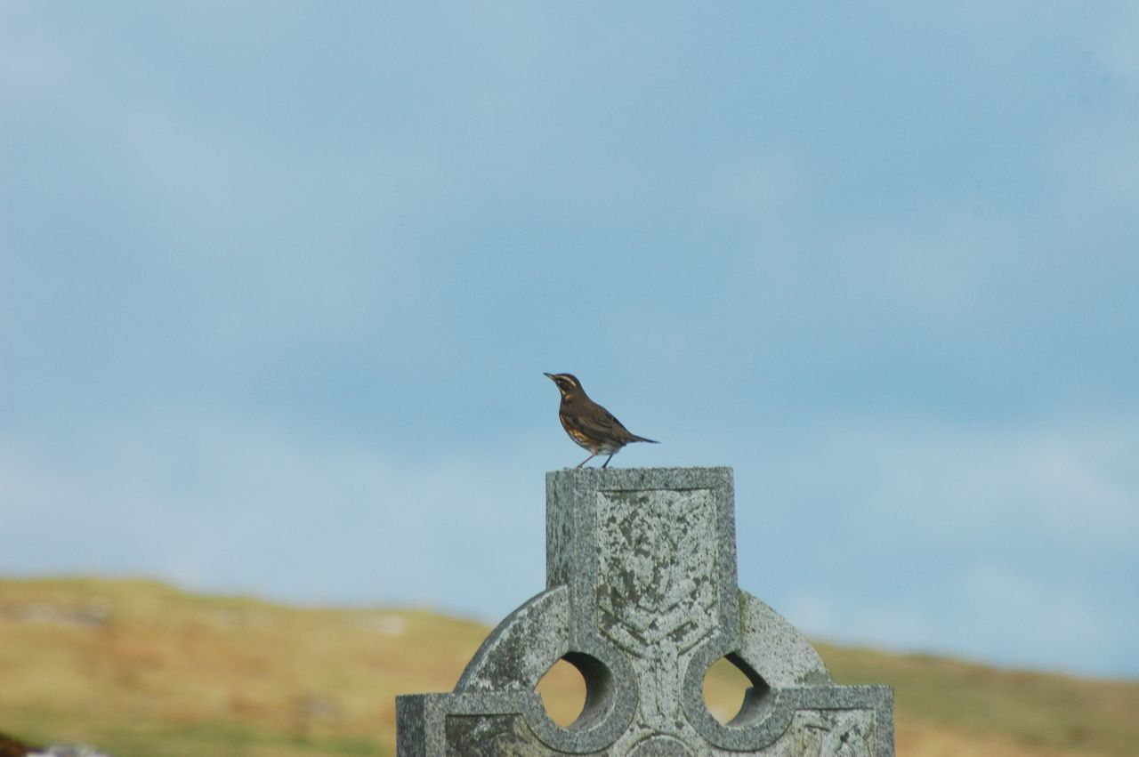 day, cross, one animal, bird, no people, outdoors, animal themes, spirituality, animals in the wild, nature, perching, sky, close-up