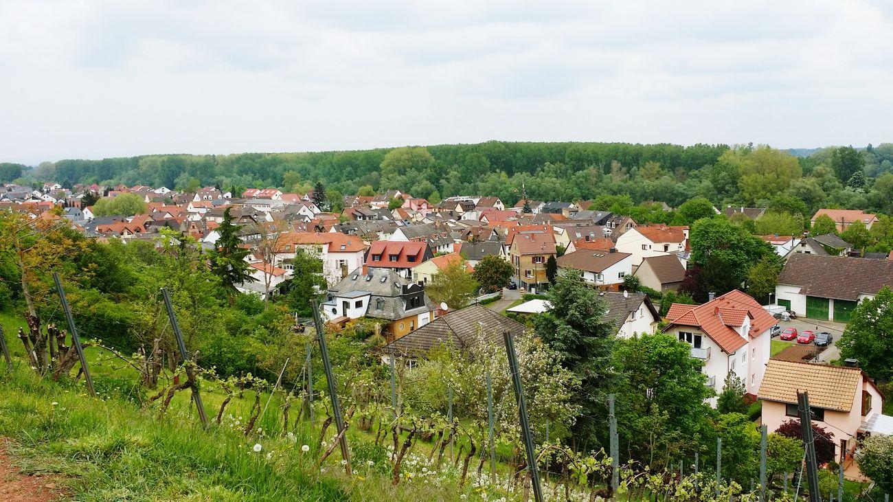 Nackenheim Nature Natur Outdoor City Stadt Eeyem Nature Lover Eeyem Photography EeYem Best Shots Eeyem 🏡🏠