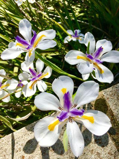 Flower Nature Gosnells Work Australia Beautiful Purple Green White