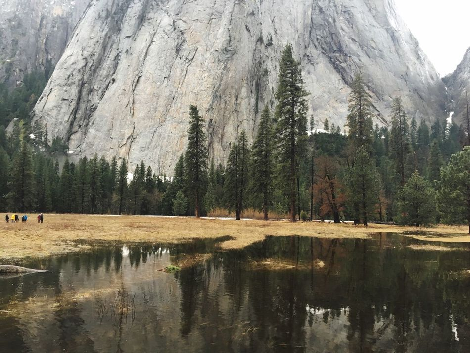 Yosemite National Park Yosemite Valley IPhone Photography Iphonephotography IPhoneography Tree Nature Reflection Mountain Tranquility Beauty In Nature Scenics Tranquil Scene Day Water Outdoors Lake Landscape No People Forest Sky
