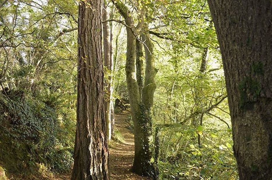 I felt like I was in a movie !🎥🌲 . . . Coedwig Forest Woods Trees Cymru Wales Nature Adventure Walks Exploring Nofilter Noedit Nikon Hyfryd Beautiful Outdoors