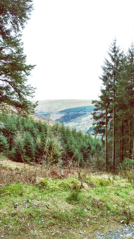 Still Wales ;) Outstanding View Outstanding Beauty Forest Wales❤ Brecon Beacons National Park Falls Walking Around Taking Photos Nature Wild Nature View From Above Tranquility Tranquil Scene Best Place To Visit Grass Green Green Grass 🌱 Pine Trees