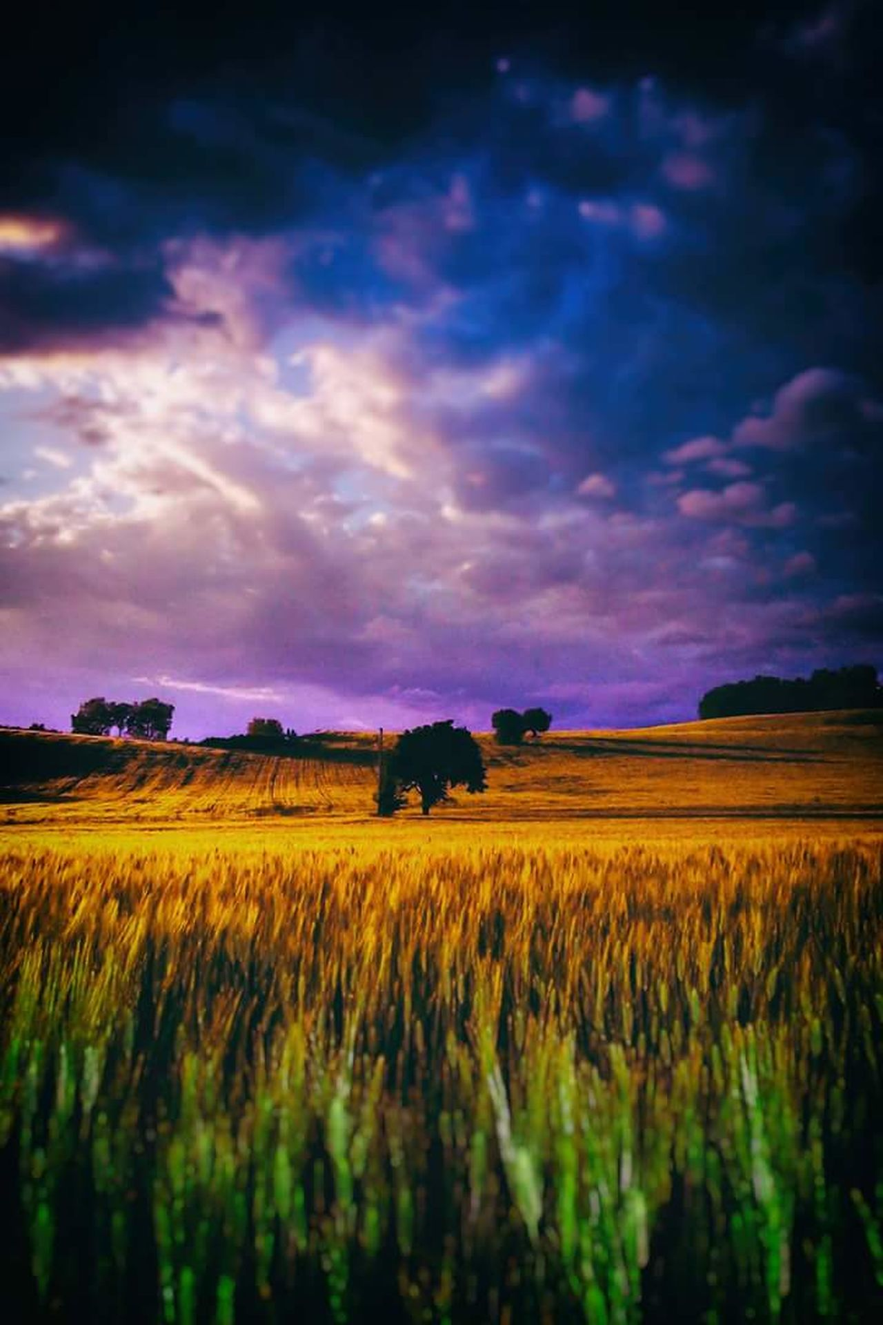 Dorothy was Here Field Dramatic Sky Sunset Tranquility Landscape Rural Scene Cloud - Sky Nature Outdoors No People Scenics Multi Colored Stormy Weather Stormclouds Photographylovers Day Nature Emotional Photography Photomania Eyemphotography Beauty In Nature Photomanipulation Emotions Captured EyeEm Best Shots Emotion In Life