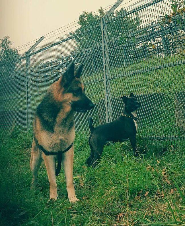 Dogs Enjoying Life Dogs Tyzer Yaya Loyalty Best Friends Essex Uk Pets Samsung Galaxy S6 Tyzer Yaya